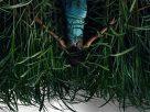 In The Tall Grass(2019) | พงหลอนมรณะ