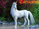 ยูนิคอร์น (Unicorn)